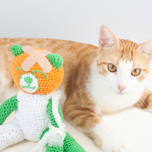 Cat takes care of injured soft toy by Shutterstock