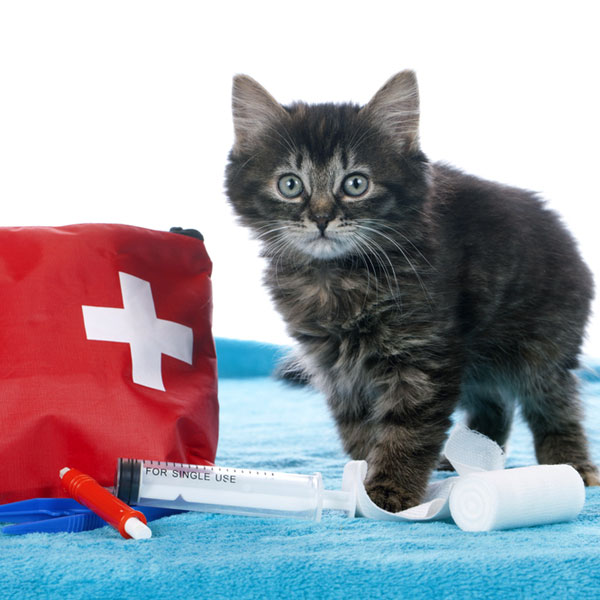Cute kitten with first aid kit  by Shutterstock