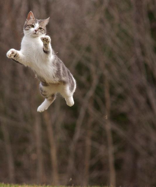 Cat Throw Up Dry Food