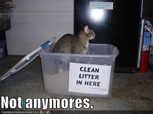 funny-pictures-there-is-no-longer-clean-litter-in-the-box.jpg