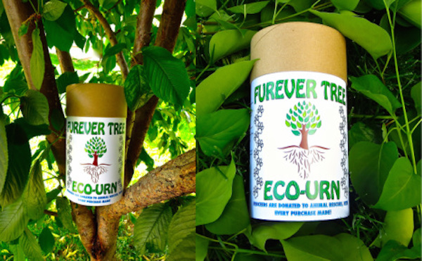 Win a Furever Tree Eco-Urn From the Collar Project