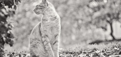 this photographer takes stunning portraits of street cats