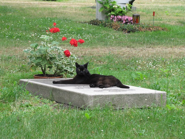 grieving-cat-gravestone-shutterstock_57079672
