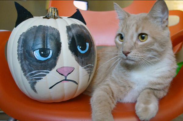 6 Cat Themed Jack O Lantern Ideas For You And Your Kids