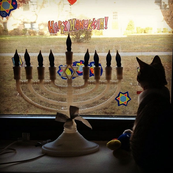 Observing Hanukkah Safety With Your Cats