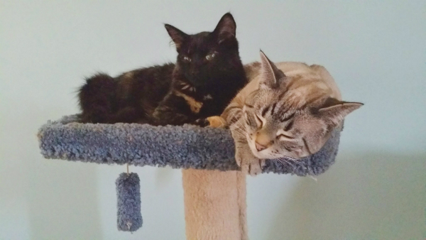 Two cats hanging out together on a cat tree.