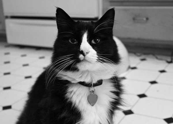The 12 Cats of Christmas: Henri, Le Chat Noir