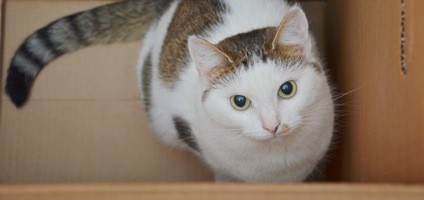 9 Tips To Make Moving Easier For Your Cat Catster