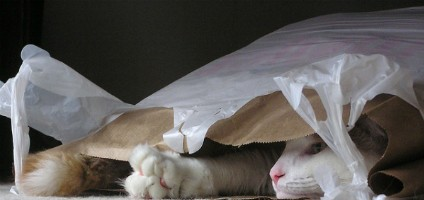 7 reasons cats love to lick plastic catster