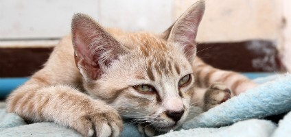 8 Dumb Excuses Not To Have Your Cat Spayed Or Neutered