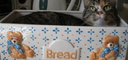 5 Names For The Common Kitty Position Known As Cat Loaf Catster