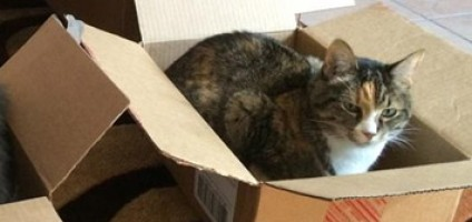 Which Size Cardboard Box Is Best? My Cats Make The Call