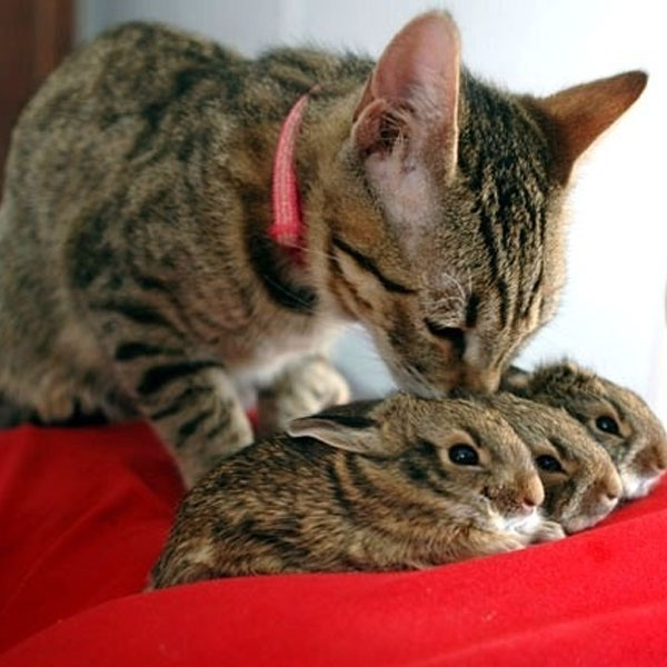 Why Do Rabbits Like Cats
