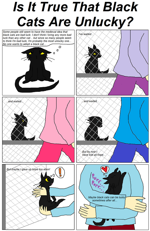I M So Over The Myth Of Black Cats As Bad Luck Are You Catster