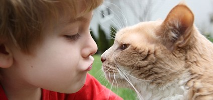 four life lessons cats can teach your kids  catster