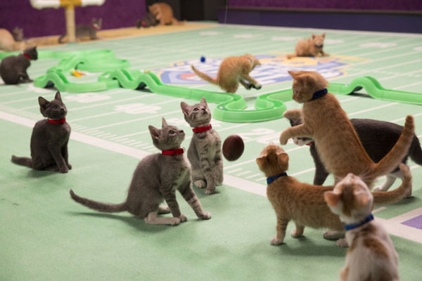 We Talk to NFL Legend Boomer Esiason About the Kitten Bowl