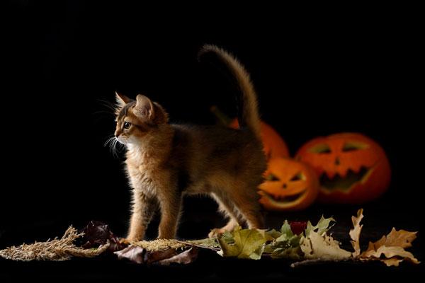 kitten-pumpkins.jpg