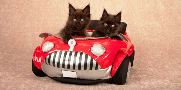 Pictures Of Cats Driving Cars