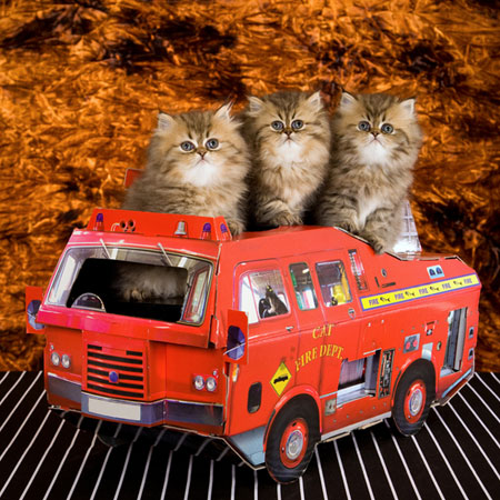 8 Tips To Make Sure Your Cat Is Prepared For A House Fire