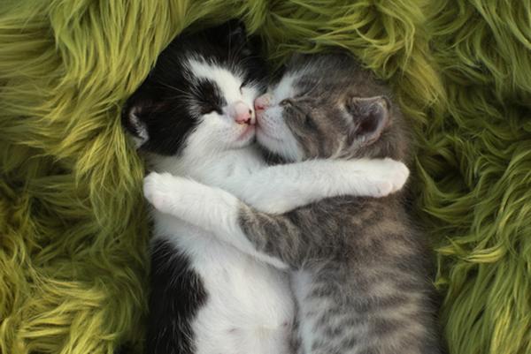 Two kittens hugging.
