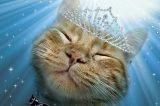 Kitty Horoscope: October Belongs to the Lovely Libra Cat