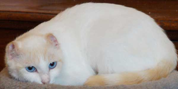 How To Help Cats With Skin Cancer Catster