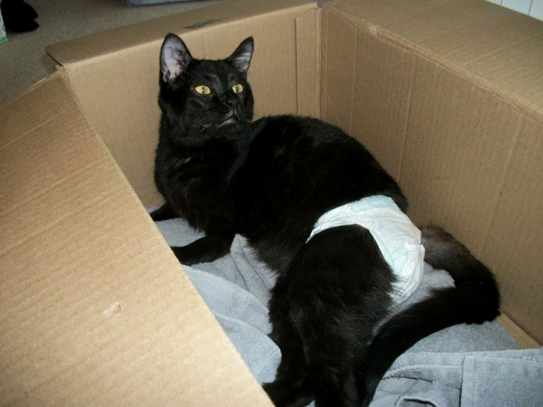 Link The Cat Was Paralyzed And On Death Row But We Re