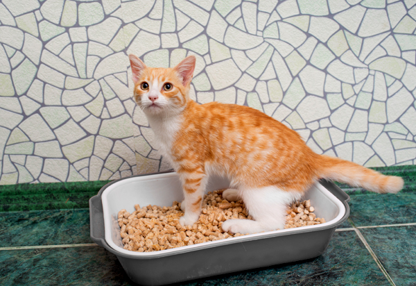 litter-box-shutterstock_218553706