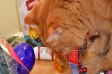 What I Need and Expect from My Cats on Mothers Day
