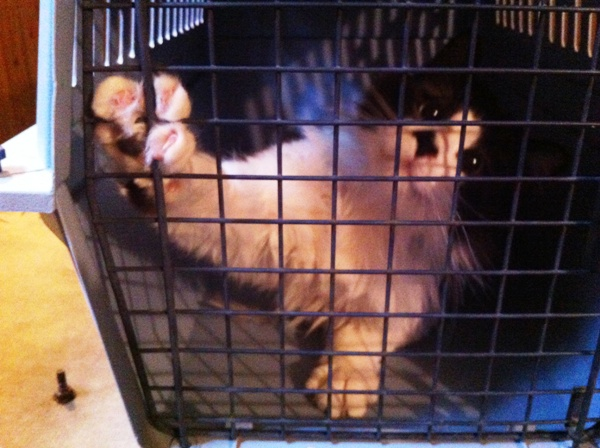 Why Using a Cat Carrier at Home is a Good Idea