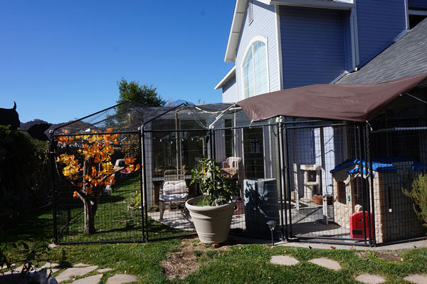 Cost To Build A Catio