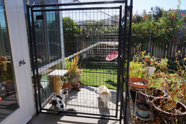 Two cats in a catio.