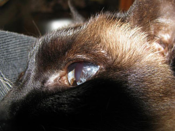 my 5 favorite organic products for cats