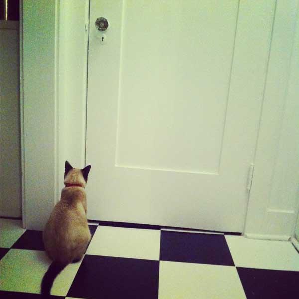 milo-stares-at-door.jpg