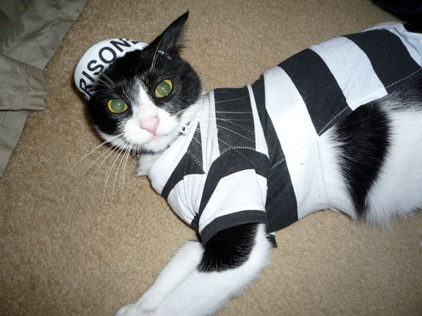 When it comes to picking out a cat Halloween costume donu0027t forget that you can also choose dog costumes for your cat; just pick one of the smaller sizes. & Win a Cat Costume for Halloween from Nip and Bones - Catster