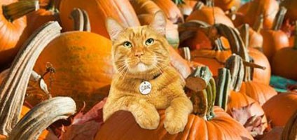 We Talk To Morris The Original Celebrity Cat Catster