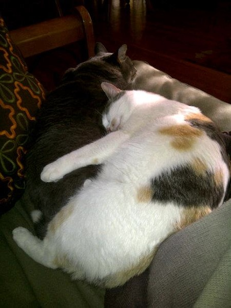 Two cats cuddling together.