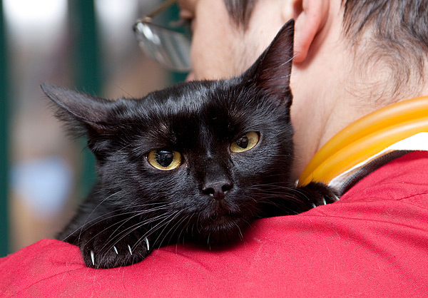 neuter-cat-black-cat-vet-73455358.jpg