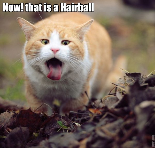 now-that-is-a-hairballfull