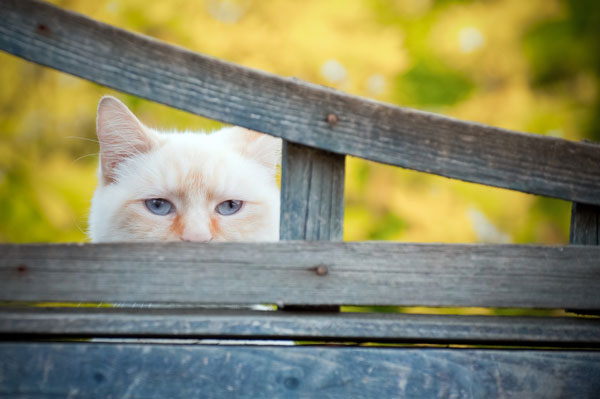 Cats Predators And Protection How To Guard Against