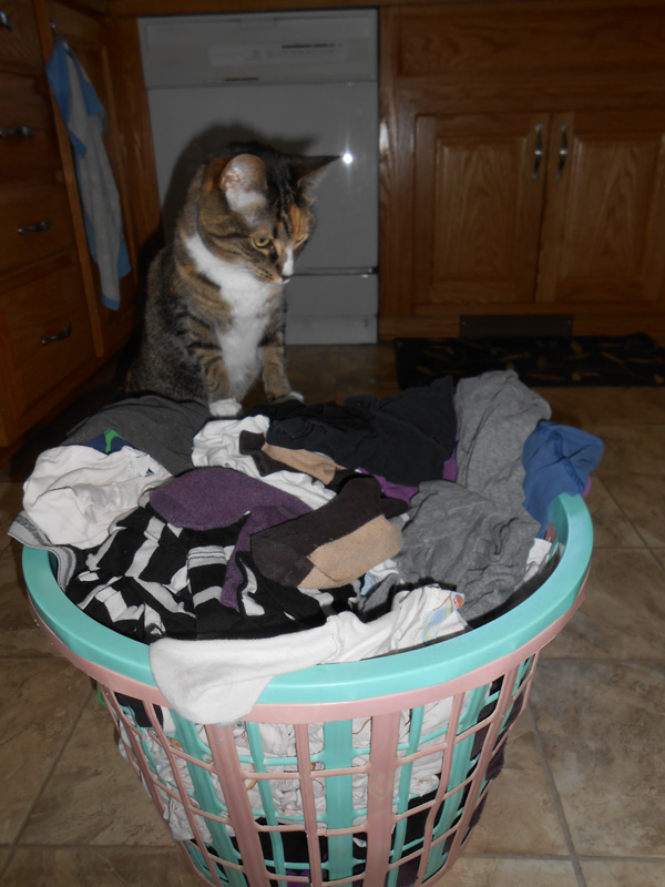 5 Household Activities My Cats Are Obsessed With Catster