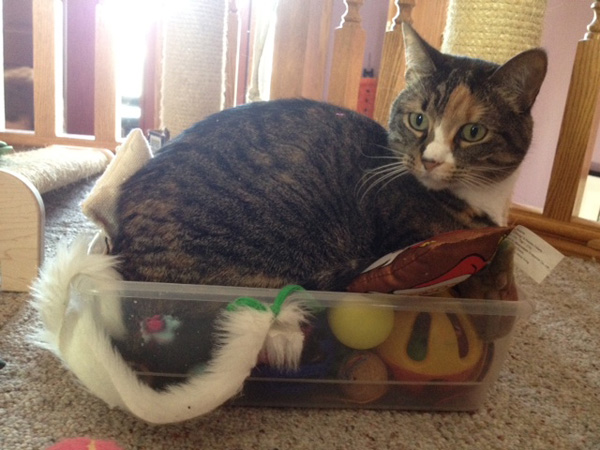 A cat in a toy box.