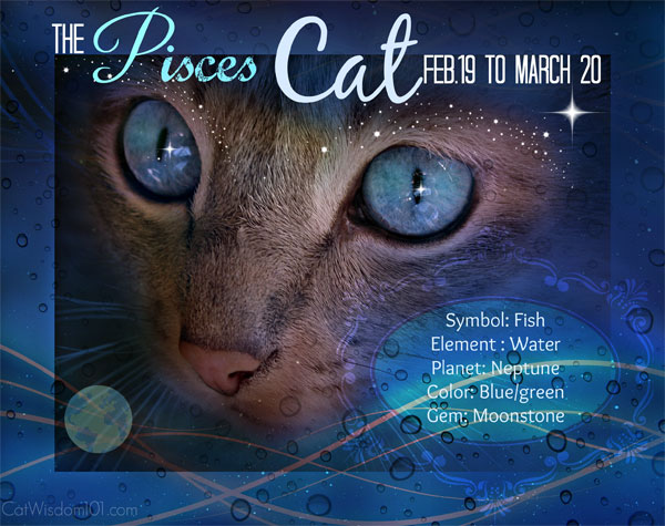 Kitty Horoscope: March Belongs to Pisces Cat, a Sweet Paradox - Catster