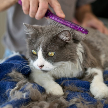 What Is Ringworm And What Are Its Symptoms In Cats Catster