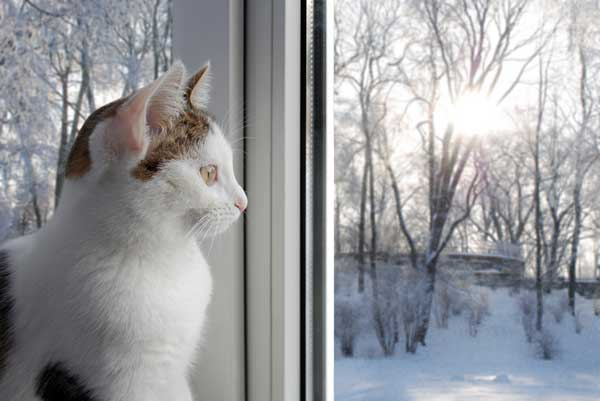 I Have A Cat Who Loves Snow Do Yours Love Or Hate Winter