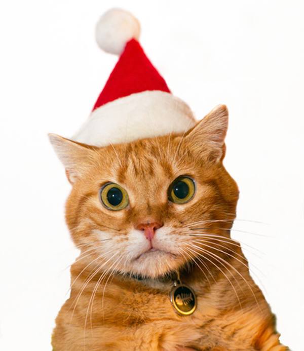 Naughty Kitty: I Just Found My Cat's Letter To Santa