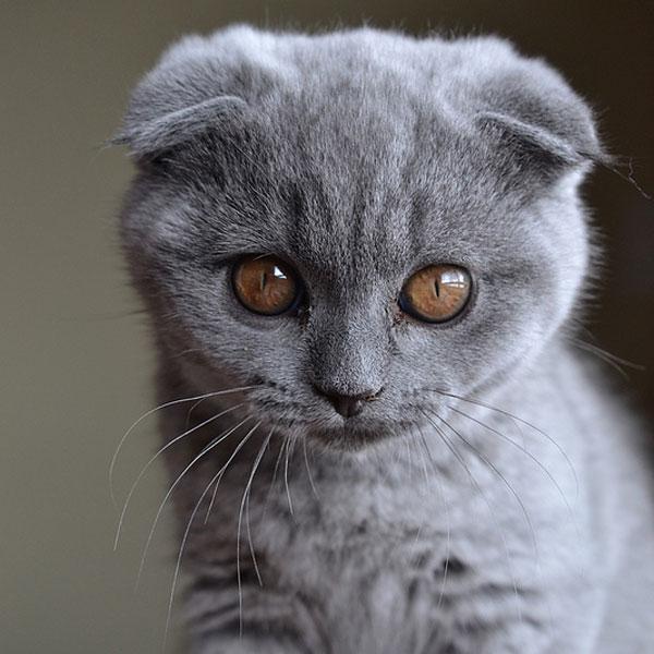 A Big Gray Cat