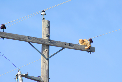 Lights Out For Kitty Maine Electric Company Shuts Off