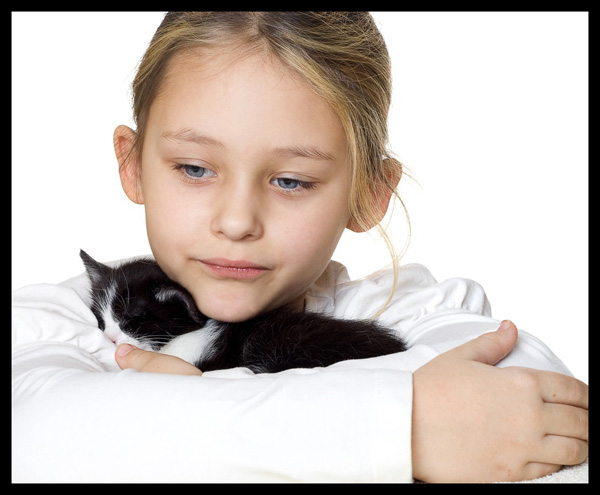 Why You Should Or Shouldn T Add A Kitten To Your Family Catster
