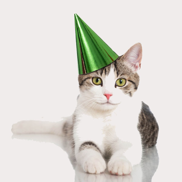 It's Your Cat's Birthday? You and Your Kids Can Throw a Party - Catster